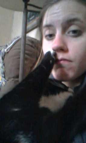 Tuxedo Cat Cuddles