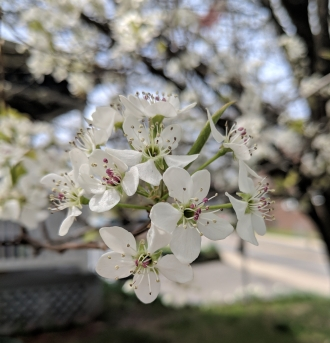 Spring Flower Tree